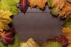 Den färgrika hösten låter vara ramen Royaltyfri Fotografi