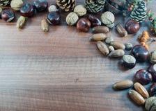 Den färgrika hösten med sidor, sörjer kottar, kastanjer, mutter Royaltyfri Foto