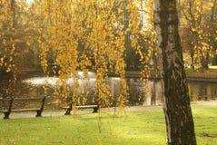 Den färgrika hösten parkerar i solig dag arkivfoton