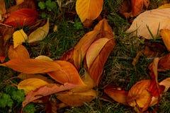 Den färgrika höstnedgången lämnar bakgrund royaltyfria foton