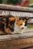 Den färgrika katten sover på bänk arkivbild