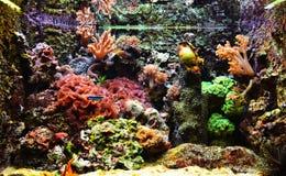 Färgrikt exotiskt akvarium Royaltyfri Bild