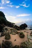 Den färgrika korallen Royaltyfri Fotografi