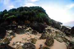 Den färgrika korallen Arkivfoto