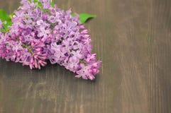 Den färgrika lilan blommar på träbakgrund royaltyfri foto