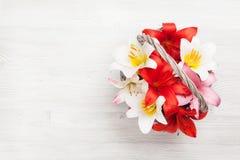 Den färgrika liljan blommar korgen Royaltyfri Fotografi