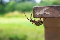 Den färgrika spindeln poserar arkivfoton
