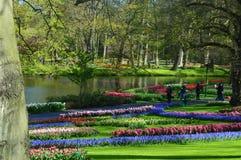 Den färgrika trädgården på keukenhof parkerar, nära amsterdam royaltyfri bild