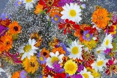 Den färgrika våren blommar bakgrund som fotograferas från över Arkivbild