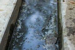 Den förorenade avrinningen är så mycket farlig fotografering för bildbyråer