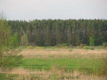 Den första gräsplanen Arkivfoton