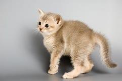 den första kattungen poserar tid som Arkivbilder