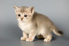 den första kattungen poserar tid som royaltyfri bild