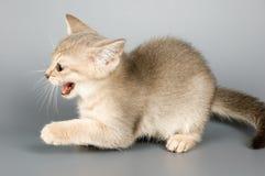 den första kattungen poserar tid som Arkivbild