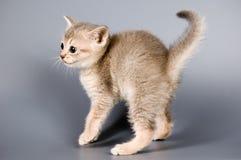 den första kattungen poserar tid som royaltyfria bilder