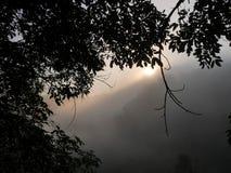 Den första morgonsolen rays i ett dimmigt landskap för mistdjungelträd Royaltyfria Foton