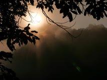 Den första morgonsolen rays i ett dimmigt landskap för mistdjungelträd Royaltyfri Fotografi
