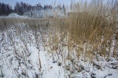 Den första snön har täckt jordningen Royaltyfri Bild