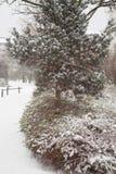 Den första snöstormen Arkivbilder