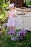 Den förtjusande barnflickan i rosa plädklänning med sekatör och korgen av lilor i vår arbeta i trädgården Royaltyfri Fotografi