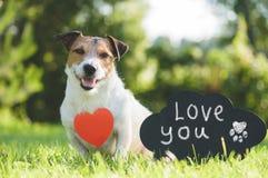 Den förtjusande hunden med hjärtaformhängen och det handskrivna tecknet älskar dig på den svart tavlan Royaltyfria Bilder