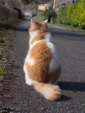 Den förtjusande katten väntar arkivbilder
