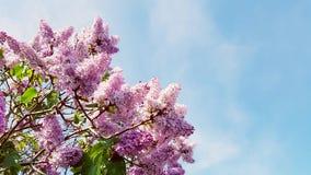 den fantastiska försiktiga rosa färgen blommar härlig sommarbakgrund Royaltyfri Fotografi