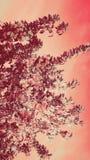 den fantastiska försiktiga rosa färgen blommar härlig sommarbakgrund Arkivbild