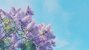 den fantastiska försiktiga rosa färgen blommar härlig sommarbakgrund Royaltyfria Bilder