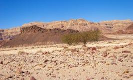 Den fantastiska geologin av Timna parkerar i Israel royaltyfria foton