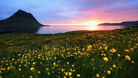 Den fantastiska solnedgången i Island, ettberg berg och en rosa himmel gör en oerhörd bild