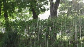 Den fantastiska starka nedgången för regnduschen förnyar träd, och rankan parkerar lager videofilmer