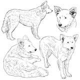Den fastställda herdehunden skissar Svart kontur på en vit bakgrund Royaltyfri Bild