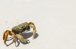 Den fega krabban på sandstranden för det vita havet nationalparken av för den Tachai ön, Similan öar, Phang Nga, Thailand i hörne Fotografering för Bildbyråer