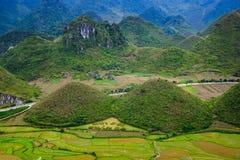 Den felika barmen lokaliseras i den Tam Son staden, Quan Ba District, det Ha Giang landskapet, Vietnam I September färgrika fält  Arkivbilder