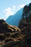 Den felika skogen och berget varvade sikt i solnedgångpanelljus Arkivbild