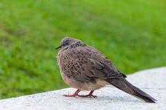 Den feta gråa fågeln parkerar offentligt royaltyfria bilder
