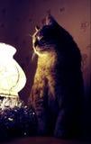 Den feta katten sitter en överkant av lampan och den väntande på julen Fotografering för Bildbyråer