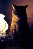 Den feta katten sitter en överkant av lampan och den väntande på julen Royaltyfria Bilder