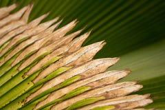Den fijianska fanen gömma i handflatan Royaltyfria Foton