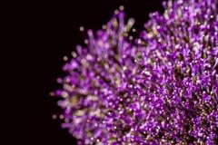 Den fina nya abstrakta lilan blommar närbilden, makrosikt för bakgrund substrate, sammansättningsbruk Med stället för ditt Arkivbilder