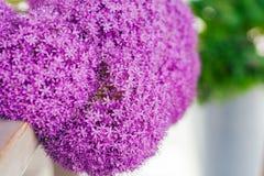 Den fina nya abstrakta lilan blommar närbilden, textur Härlig naturlig blom- bakgrund, alltid trendig modern färg Begrepp Arkivbilder