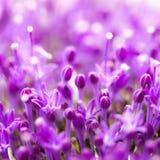 Den fina nya abstrakta lilan blommar närbilden, textur Härlig naturlig blom- bakgrund, alltid trendigt modernt Royaltyfria Foton
