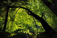 den fläckiga almlampamorgonen skiner though treen Arkivfoton