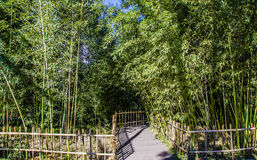 Den flödande bambu, Peking royaltyfri bild