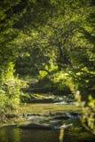 Den flödande floden över vaggar i bergen fotografering för bildbyråer