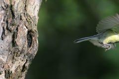 den flög fågeln har Arkivfoto