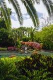 den florida trädgården gömma i handflatan Arkivfoton