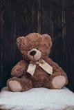 Den flotta björnen sitter på kudden arkivbilder