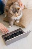 Den fluffiga katten ser nyfiket bärbara datorn royaltyfri foto